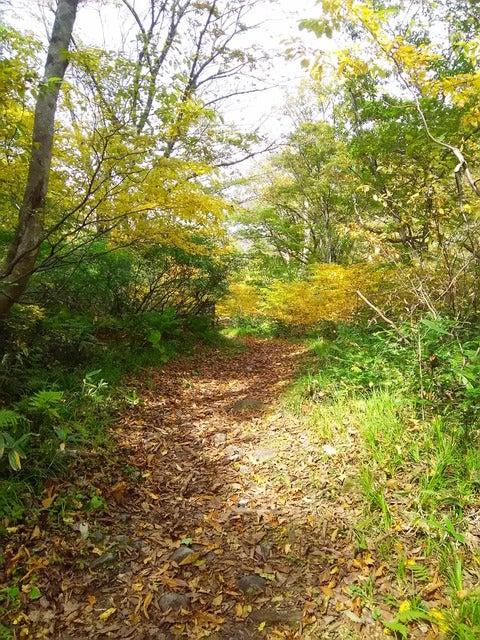 湯檜曽川沿いの散策路。鎌倉の里山のような気軽なルートだ撮影:山口和幸